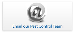 Pest Control Email Form
